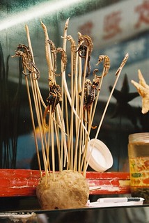 seahorses on sticks | by kate nev