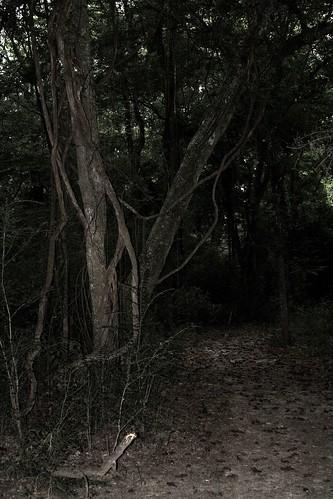 nature landscape woods forboding mrgreenjeans gaylon darkplaces gaylonkeeling