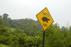 Turtle Xing | by jahansell