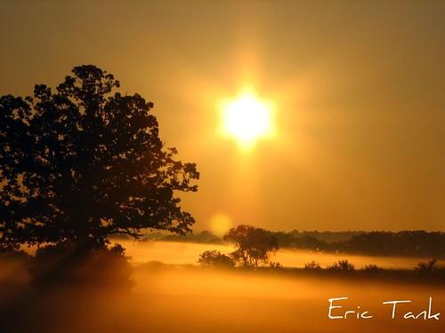 morning trees orange sun fog sunrise bec superbmasterpiece diamondclassphotographer theperfectphotographer happyclicking