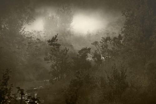 Mist ...