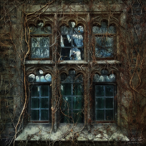 window fairytale universityoftoronto ivy bluebird justimagine alarecherchedutempsperdu —obramaestra—