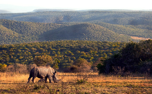 Lone Rhino | by Vin Crosbie