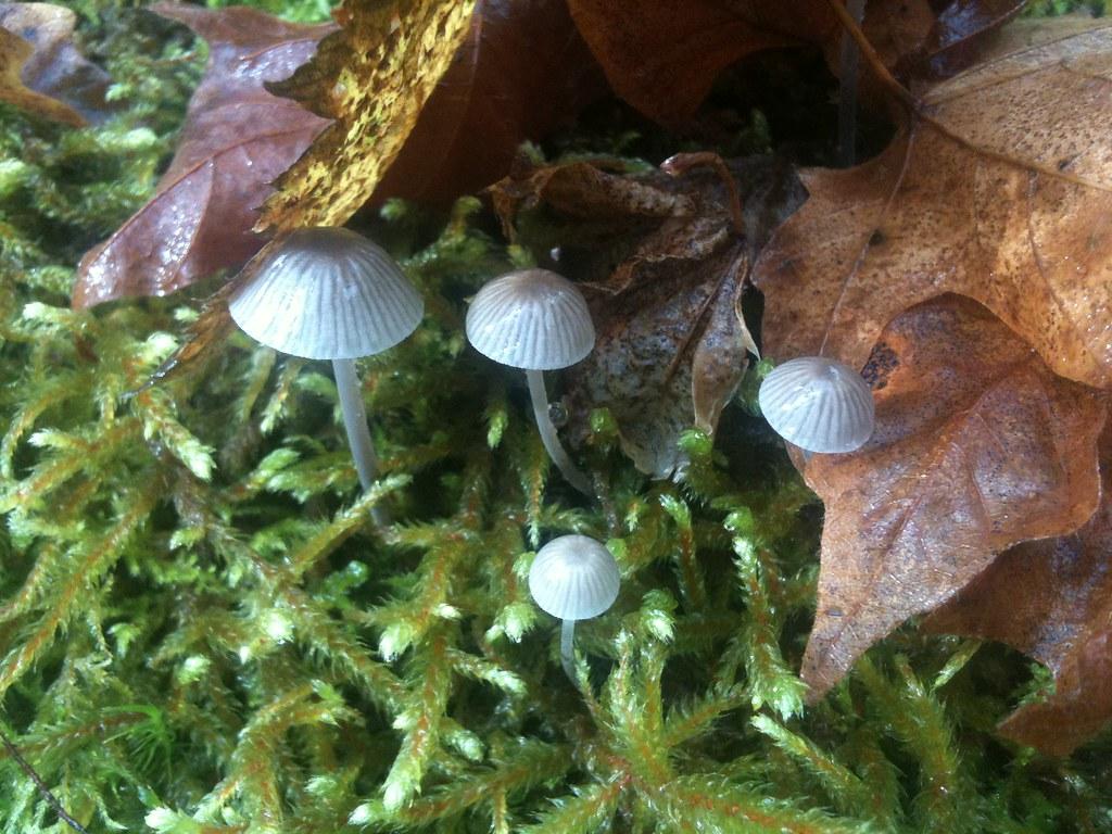 Quite possibly psilocybin mushrooms