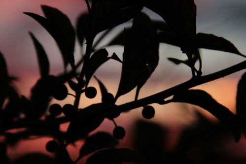 autumn nature sunrise louisiana mrgreenjeans gaylon autumnmorning centralla artlibre sunriseonjoorrd gaylonkeeling