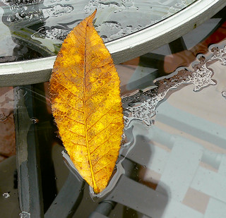 Leaf On Wet Table #2 | by dee_r