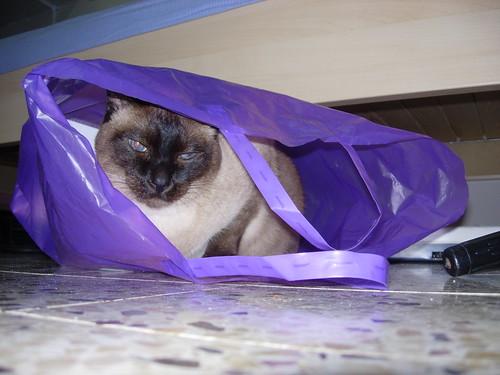 Cat In a Bag | by Or Hiltch