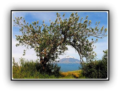 El Árbol y el Volcán