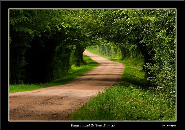 Tunnel végétal... (Nièvre)