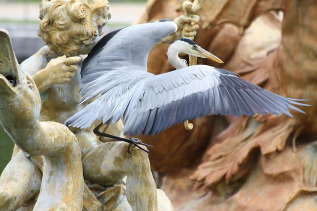 Le Héron du Parc du Chateau de Versailles
