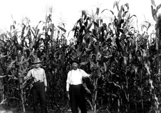 Demonstration agent O.L. Mizelle in field of corn with farmer J.S. Howard: Bradford County, Florida