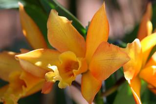 Orquídea | by Antonio Machado