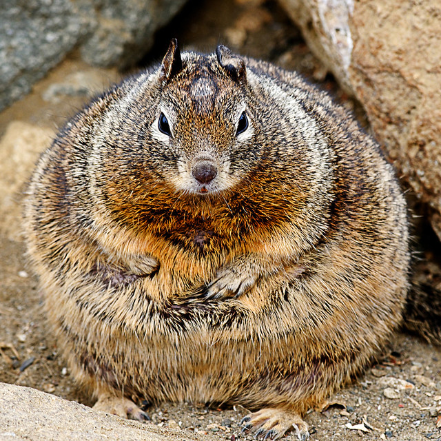 Jabba the Squirrel