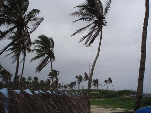 Coconut grove in Colva Beach   by nImAdestiny