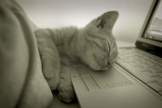 The Sleeping Geek Kitten - Angers - | by Nathonline-Beta