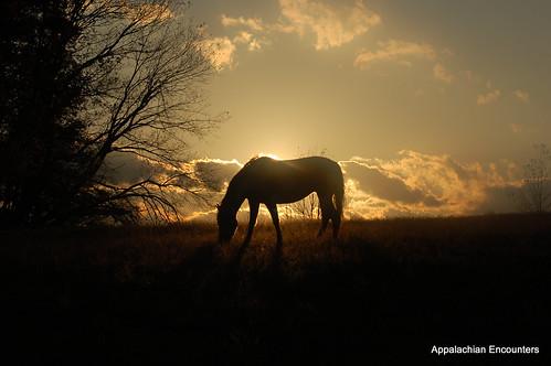 autumn horses fall colors photography landscapes sunsets northcarolina pastures boone blueridgemountains blueridgeparkway appalachianmountains