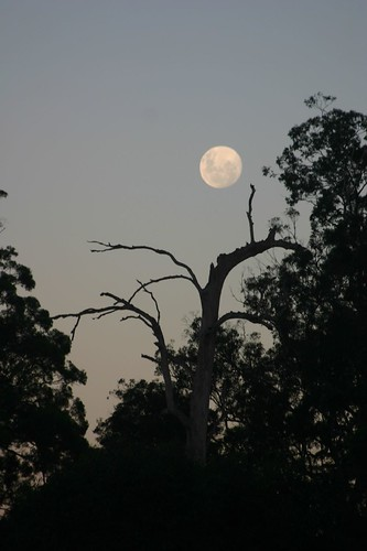 sunset sky moon silhouette geotagged evening twilight daughter australia ellie moonrise waterskiing eleanor portmacquarie auspctagged iansand telegraphpoint geo:lat=31329079 geo:lon=152804278