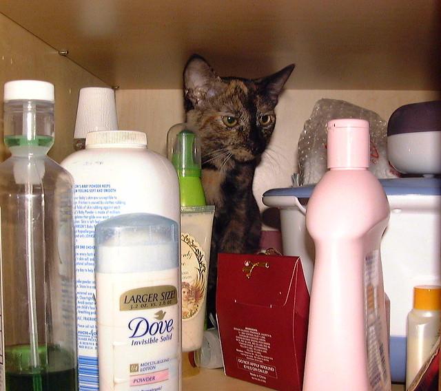 Munchkin the tortie cat inside the bathroom closet