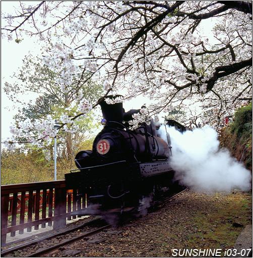 i03_07,06032227-蒸汽火車-阿里山-嘉義縣-阿里山鄉-吉野櫻-櫻花-火車-蒸氣火車-鐵道