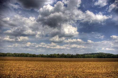 Corn | by Jason Dunnivant