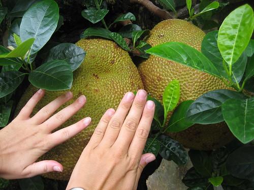 Big fruit   by thalling55