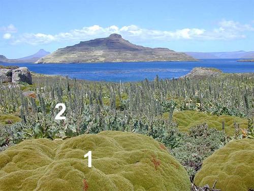voyage geotagged vegetation kerguelen coussin stationalpinejosephfourier geo:lat=49329597 geo:lon=7018753 bassealtitude