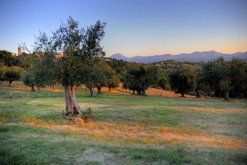 sunset italy tree beautiful landscape italia earth olive di tramonti provincia paesaggi marche colline castelli ulivi ancona supershot utatafeature nikonstunninggallery mywinners abigfave maiolati spontini marchigiane wowiekazowie jeasi