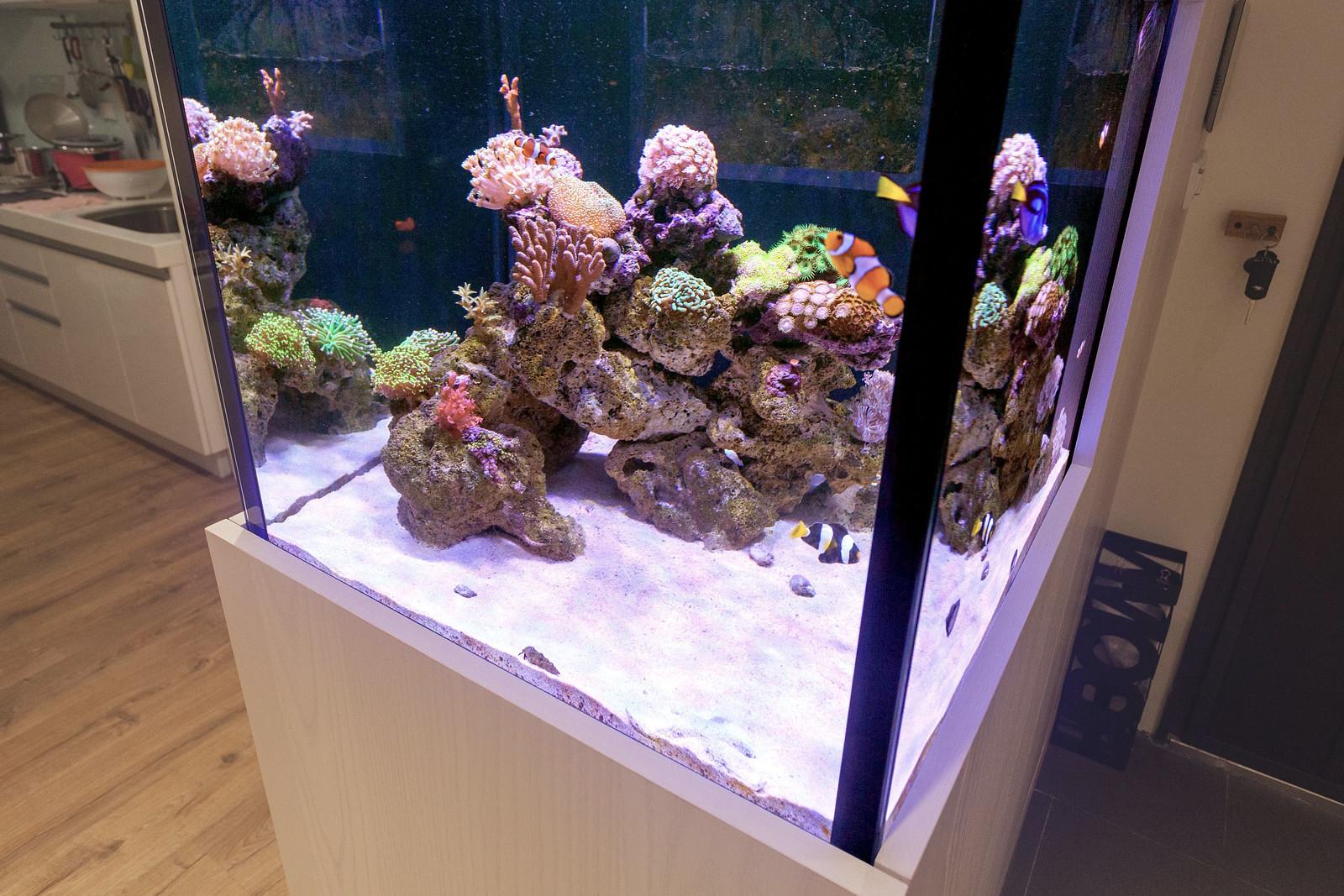 海水缸紀錄(滿 4 個月)