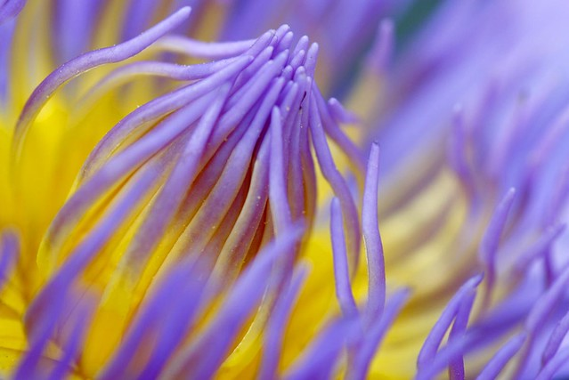 Yellow on Violet
