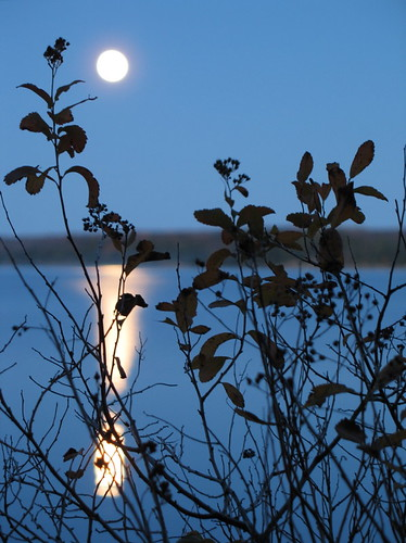 Moonrise (2) | by andyscamera