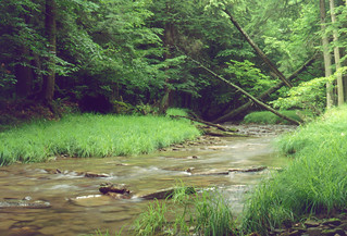 Allegheny National Forest - Stream | by SheepGuardingLlama