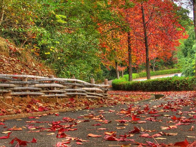 ผลการค้นหารูปภาพสำหรับ autumn hdr