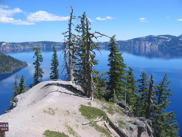 Scraggly Trees on Crater Lake