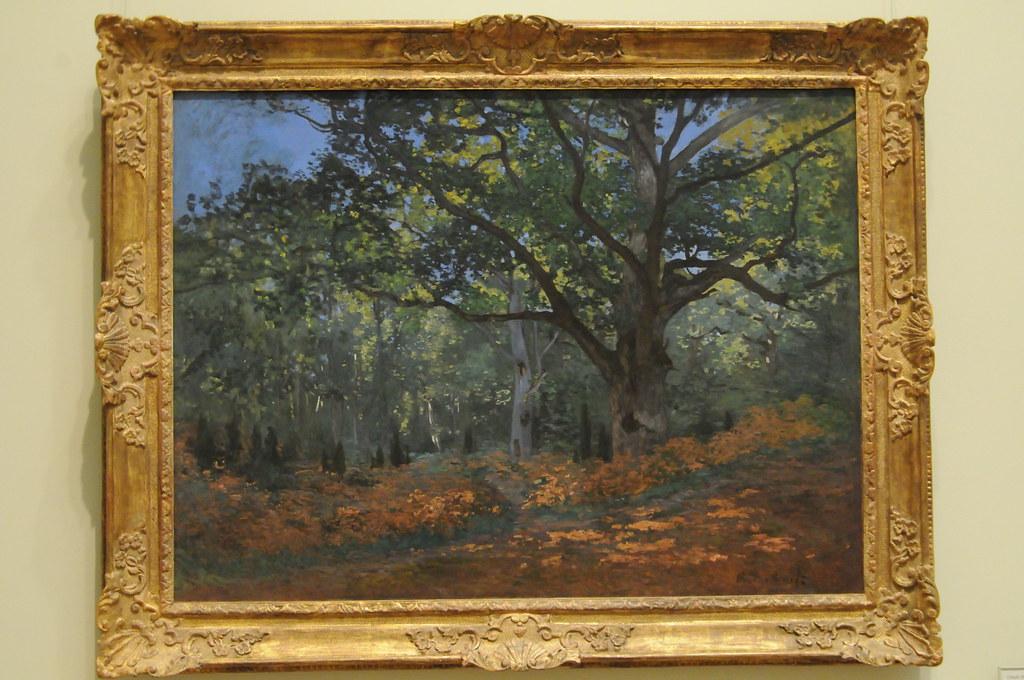 the bodmer oak : Unfortunately I don't know either. - debbiebissett.com