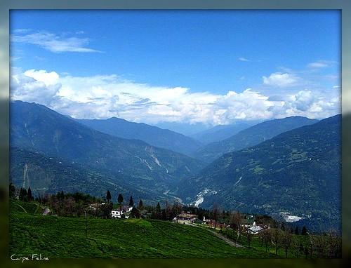 india geotagged asia tea sikkim westbengal gangtok subcontinent carpefeline temiteagarden geo:lat=27266227 geo:lon=88579674 mygearandme
