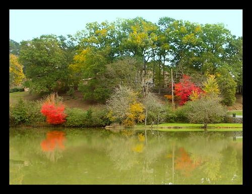 park trees water pool landscape outdoors pond scenery foliage naturetravelromegeorgiausaautumnfallnovembernikoncoolpixjgraceystinsonseasons