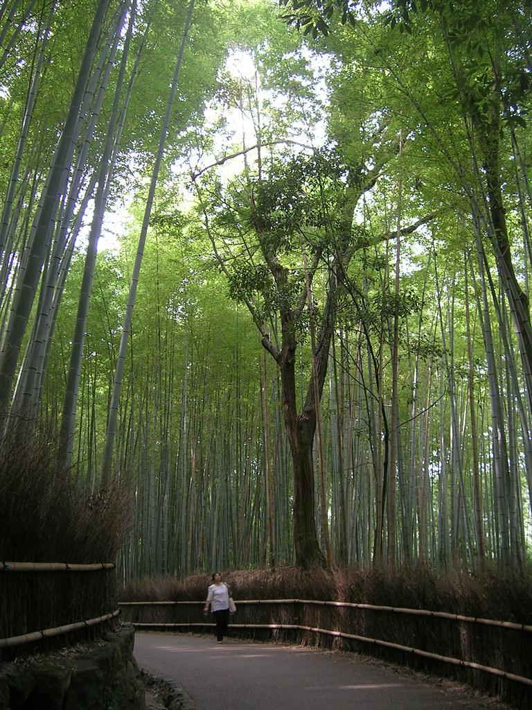 Bosco Di Bamb.Bosco Di Bambu A Arashiyama Rossella Flickr