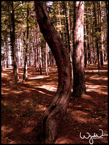 Curve-Tree