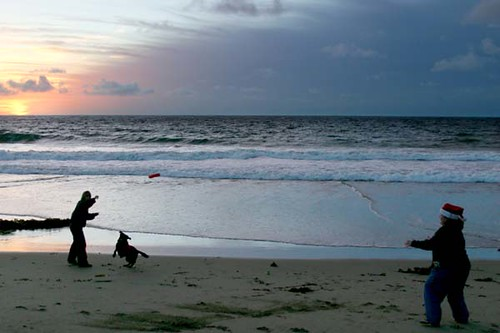 Noah's photo.  Playing Frisbee on the beach at sunset with Julie and her hearing dog, Matea.