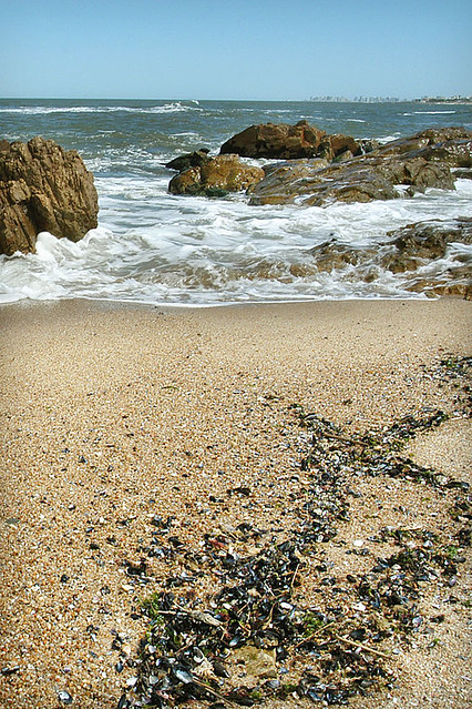 Washed up mussels