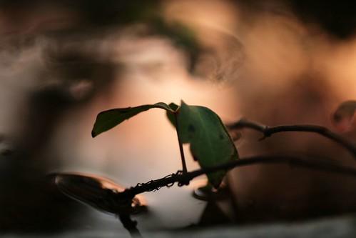 pink sunset macro reflection green wet water leaves catchycolors birdbath bokeh x mrgreenjeans gaylon gaylonkeeling