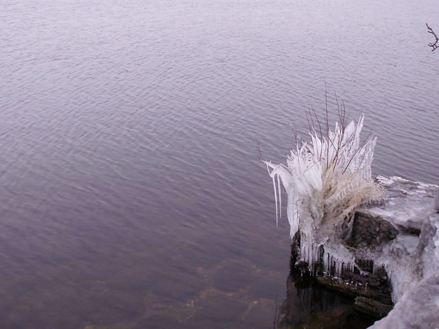 icicles by the water