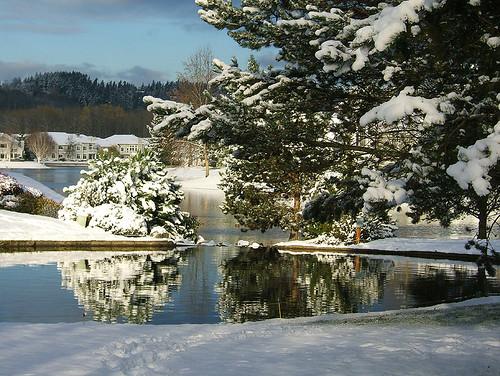 backyard kentwa pond shesnuckinfuts snow cold november2006 washingtonstateoutdoors winterreflection experiencewa coolest