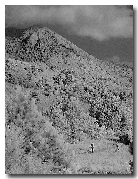 The Longest Trail...