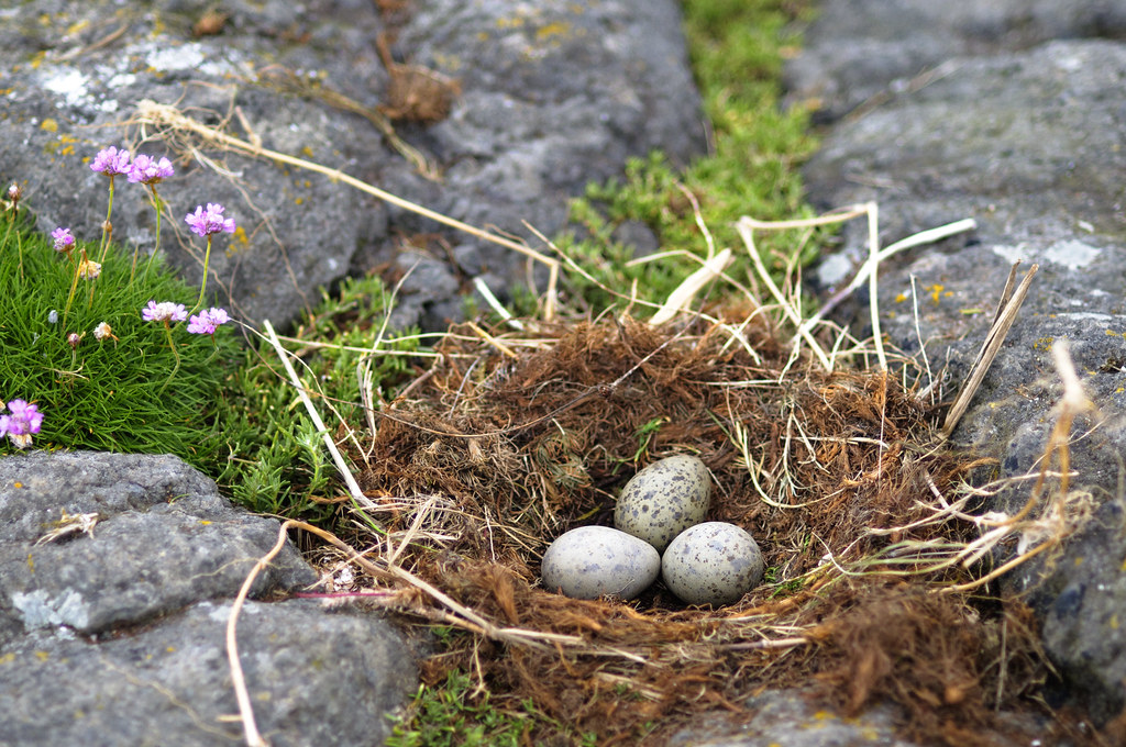 Seagull's Nest | This is was just a stones throw from the cr