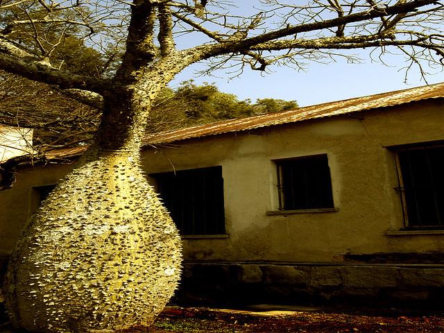 Bloated tree