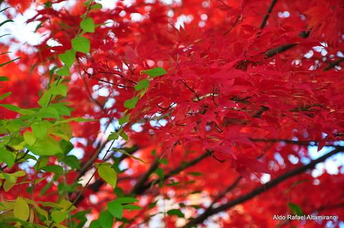 color colour tree fall nature colors nikon colours pa honesdale nikond90 aldorafaelaltamirano rafaelaltamirano aldoraltamirano