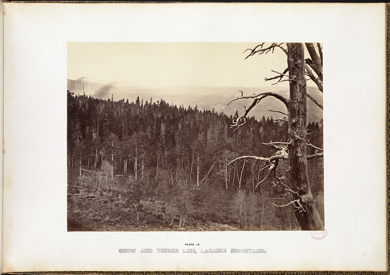 Snow and timber line, Laramie Mountains.