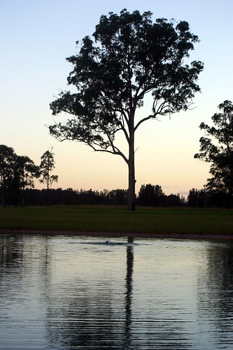 sunset tree silhouette geotagged evening twilight daughter australia ellie eucalypt waterskiing eleanor portmacquarie auspctagged peopleplacesevents iansand telegraphpoint geo:lon=152804278 geo:lat=31329134
