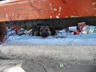 Trash Doggie